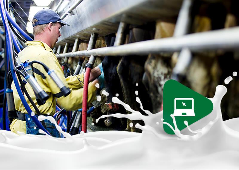 Pecuária de leite no Brasil: Saiba por que vale a pena!