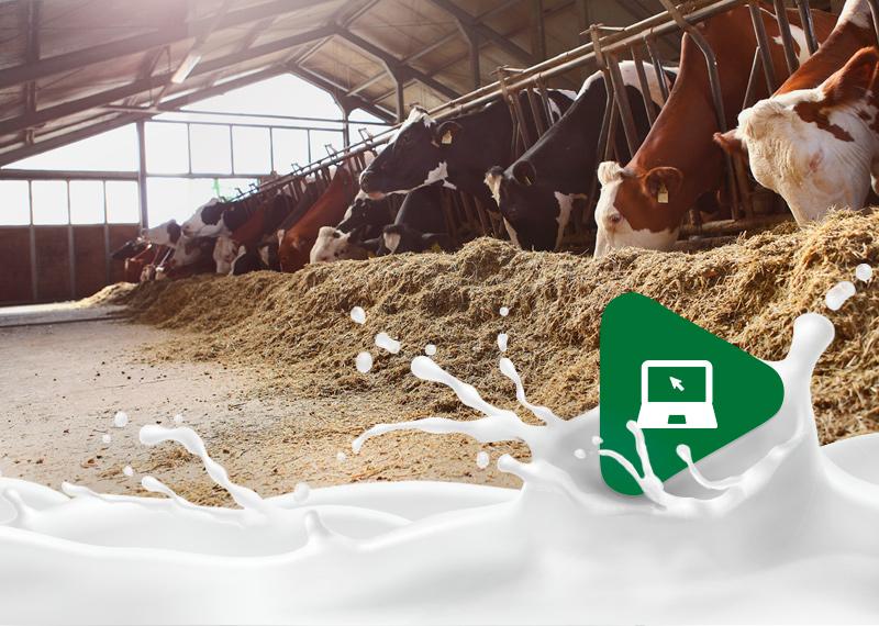 Sanidade: um dos maiores desafios da produção leiteira