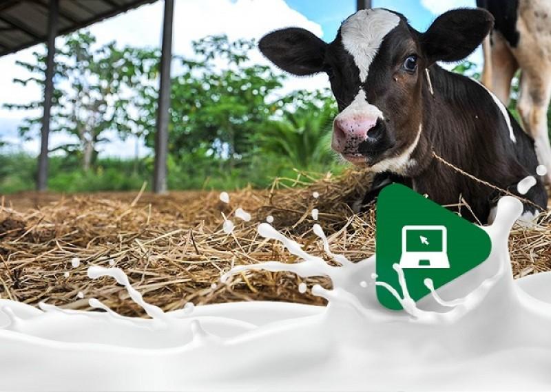 6 principais cuidados com bezerros para garantir a produção de leite de qualidade!