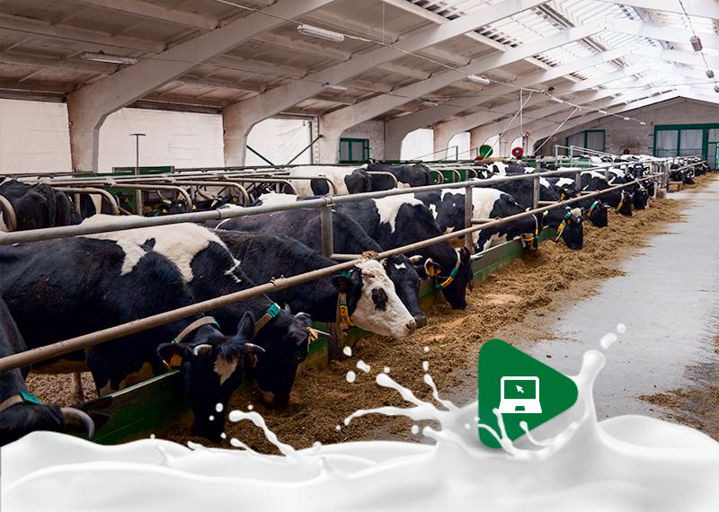 Novo momento da produção leiteira: Quais aspectos são importantes para garantir a lucratividade?